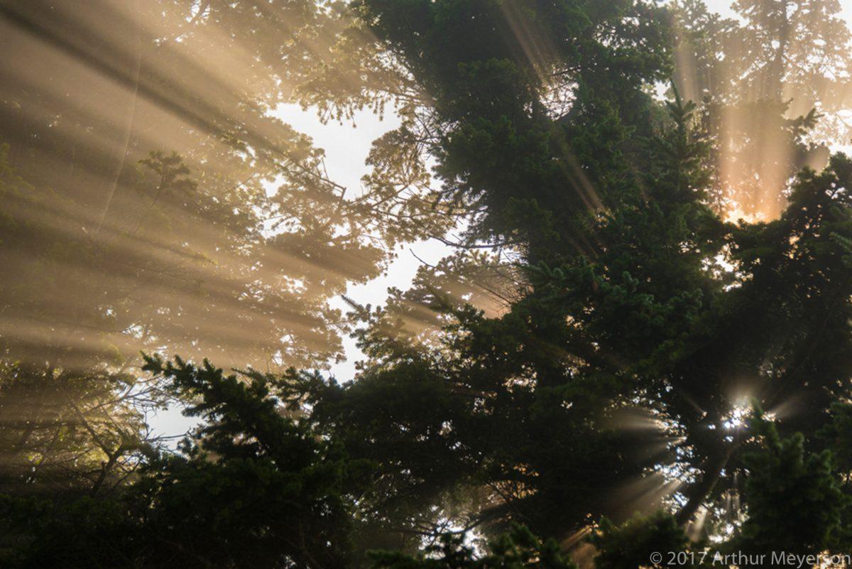 Sun Rays, Washington